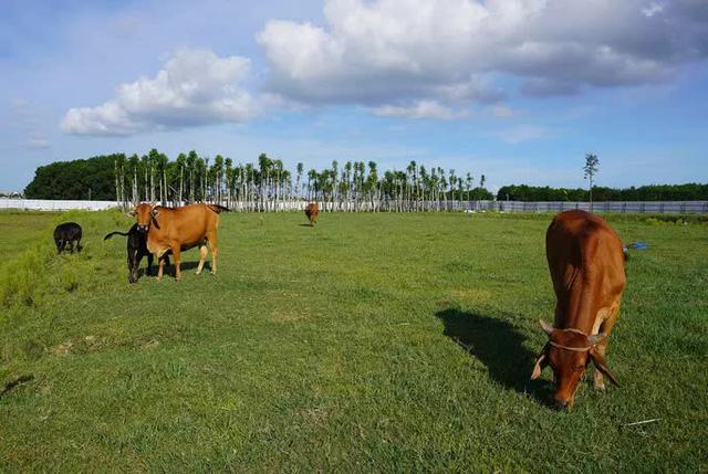 Dự án 670 tỉ đồng đắp chiếu, thành bãi chăn bò  - Ảnh 9.